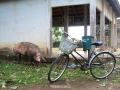 cambodia real life 44