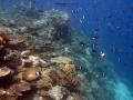 coral garden2
