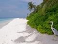 maledives 12