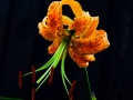 flower-garden-6