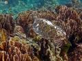 similan-islands-27