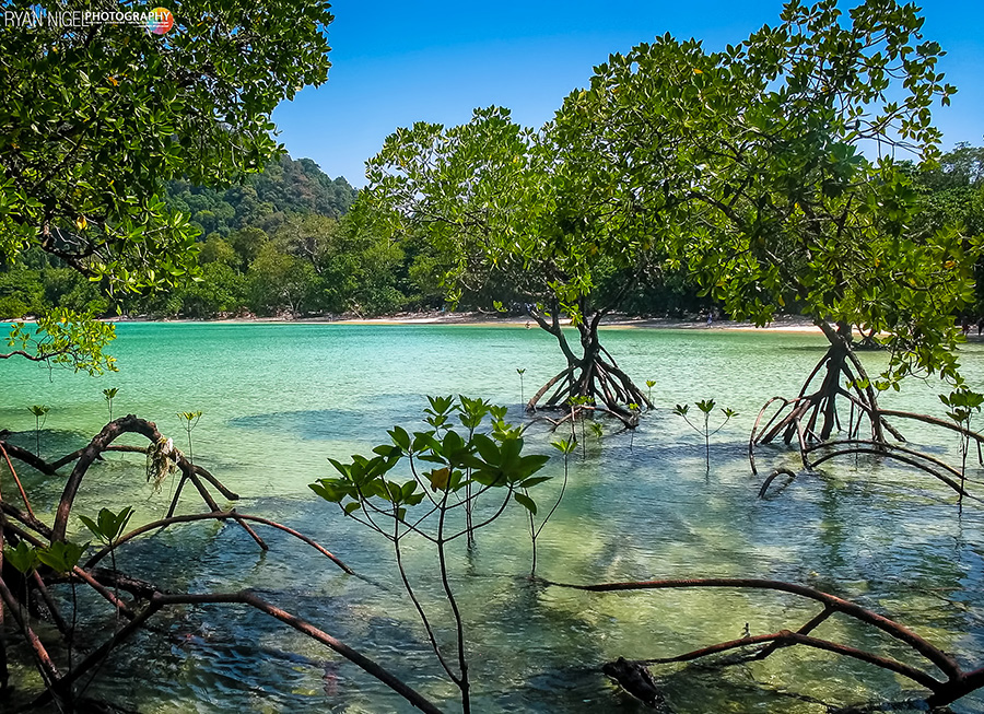 mangroves surin islands
