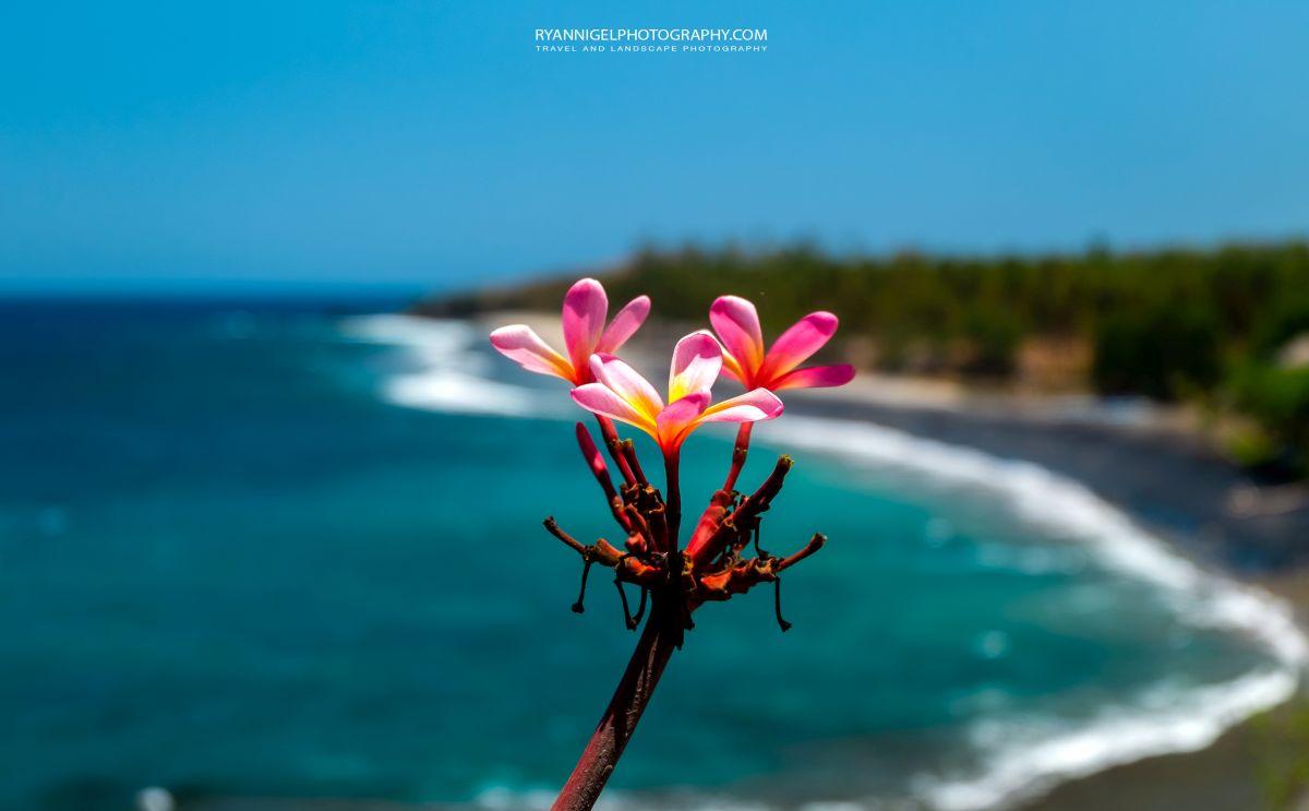 Leelawadee Flower at Karandangan Viewpoint West Lombok