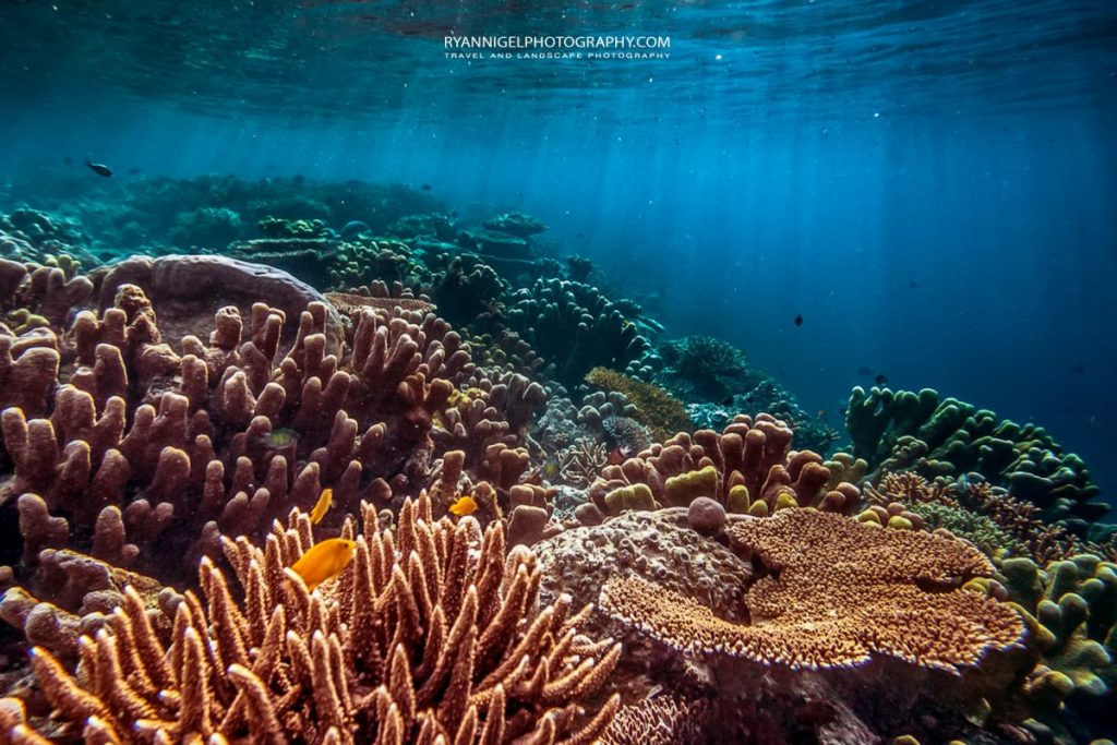 coral gardens at gam house reef 2