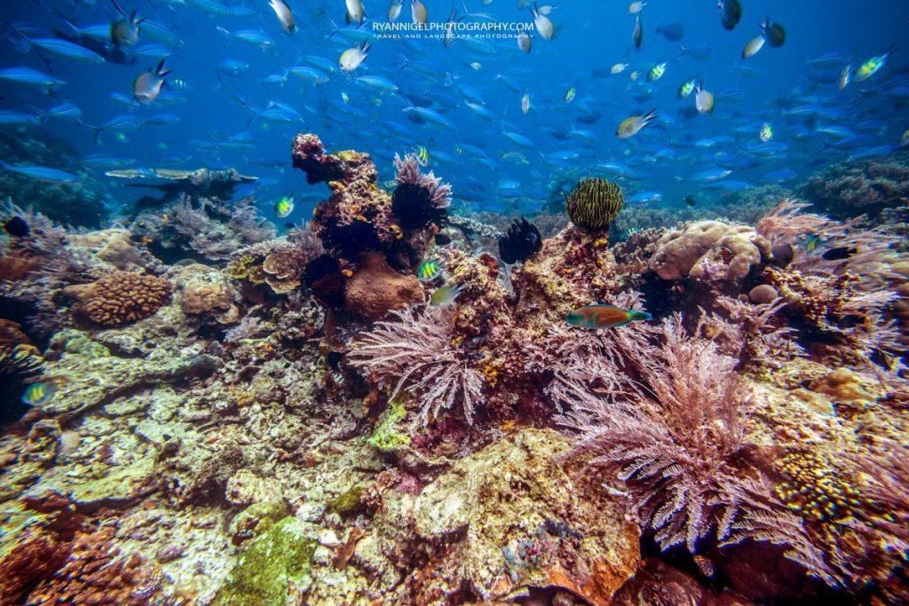 coral reef mansuar island raja ampat