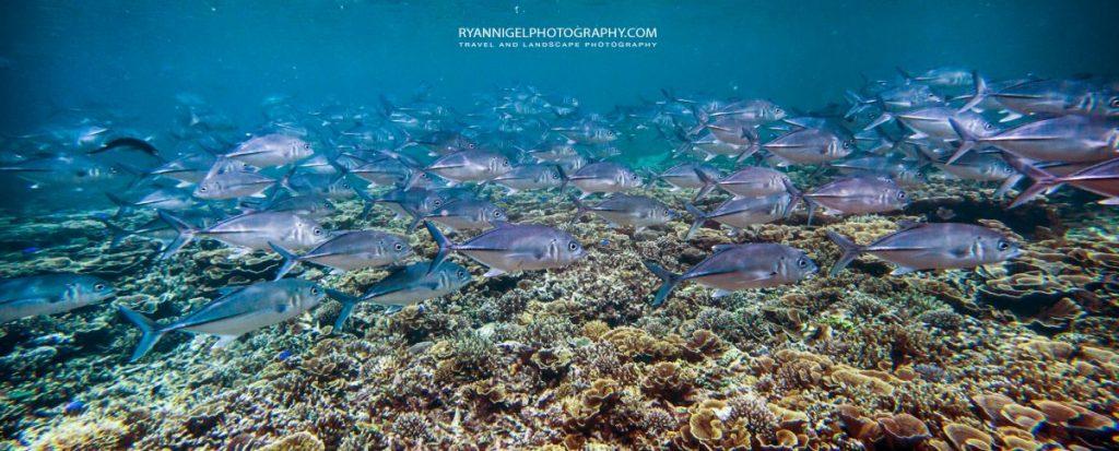 coral reef mansuar island raja ampat 2