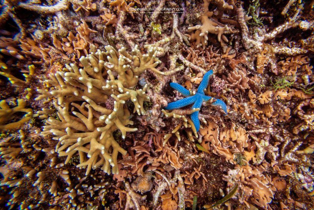coral reef raja ampat