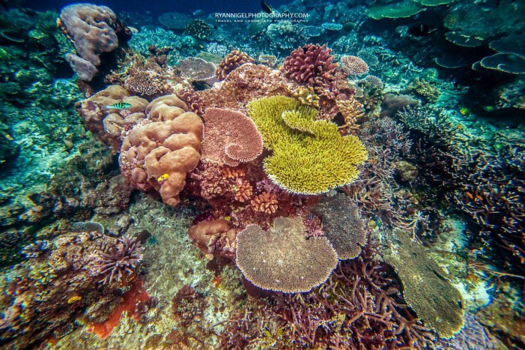 coral reef raja ampat 2
