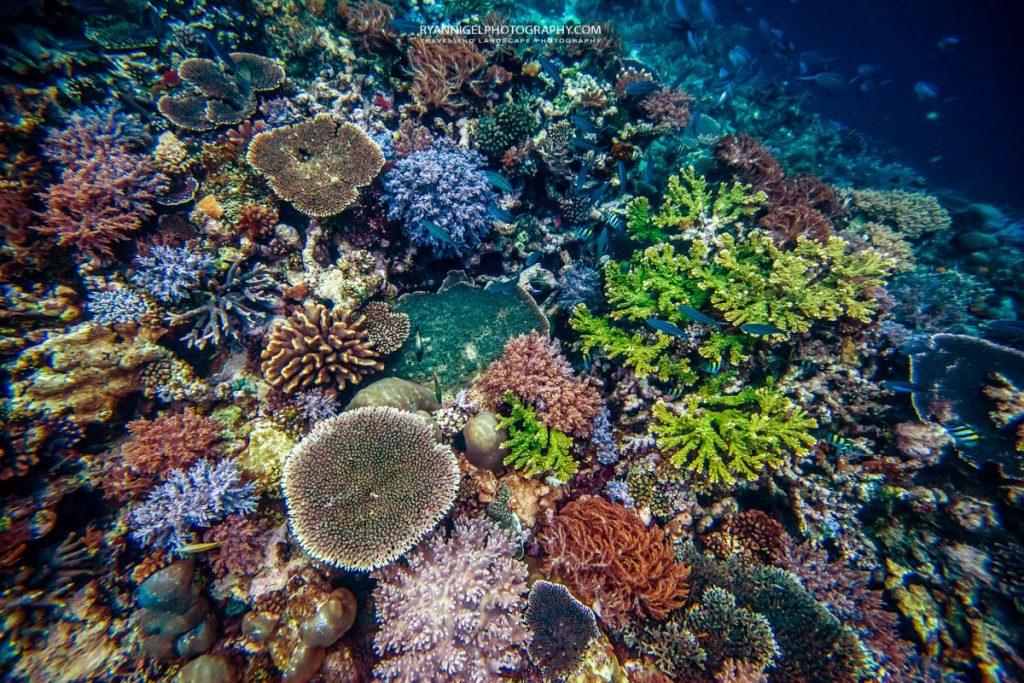 coral reef raja ampat 3