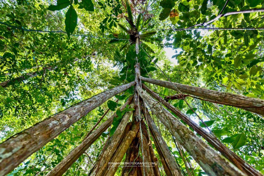 raja ampat mangroves gam island
