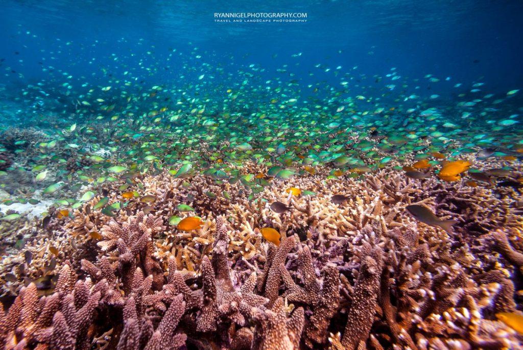 snorkeling mansuar island raja ampat