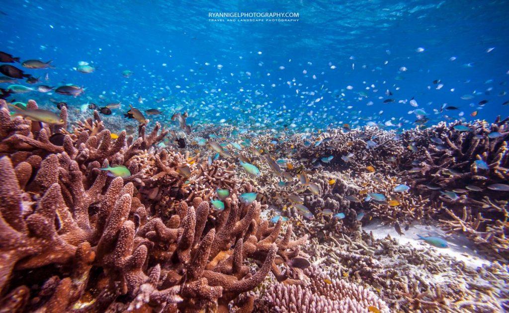 snorkeling mansuar island raja ampat 2