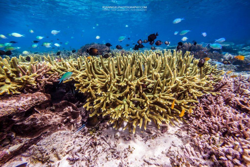 snorkeling mansuar island raja ampat 3