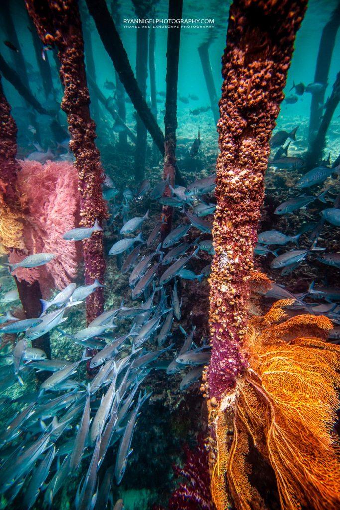 snorkeling mansuar island raja ampat 4