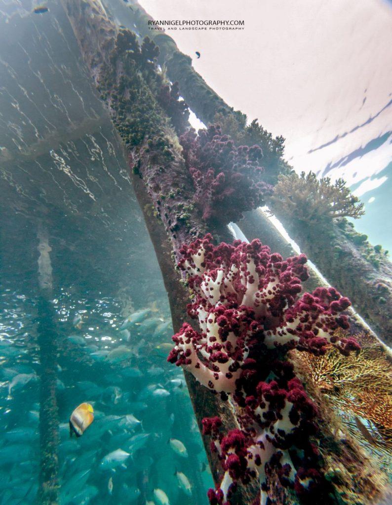 snorkeling mansuar island raja ampat 5