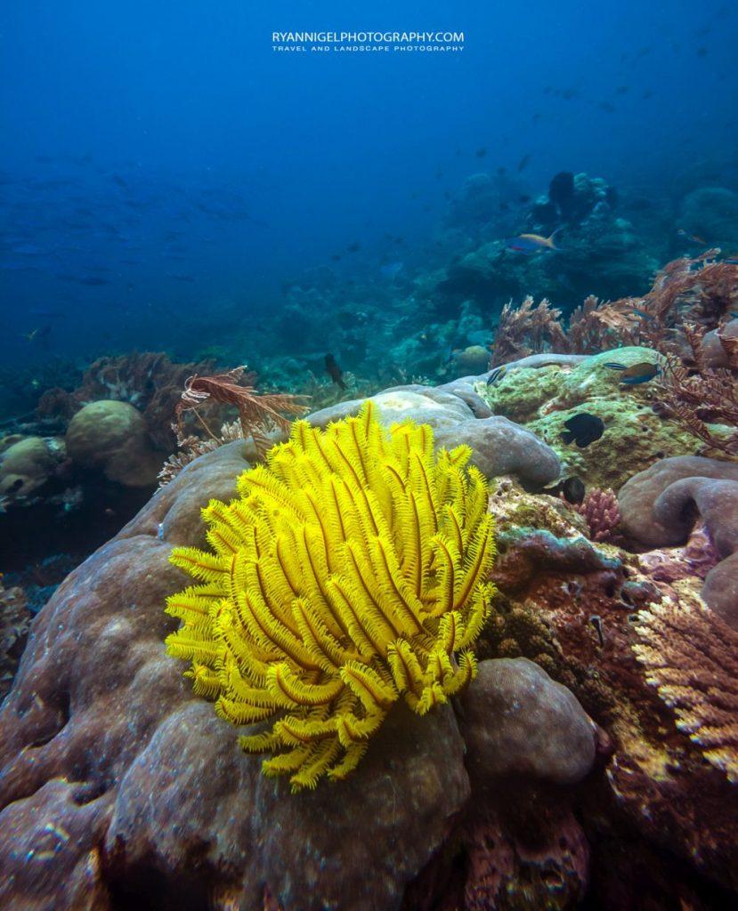 snorkeling mansuar island raja ampat 6