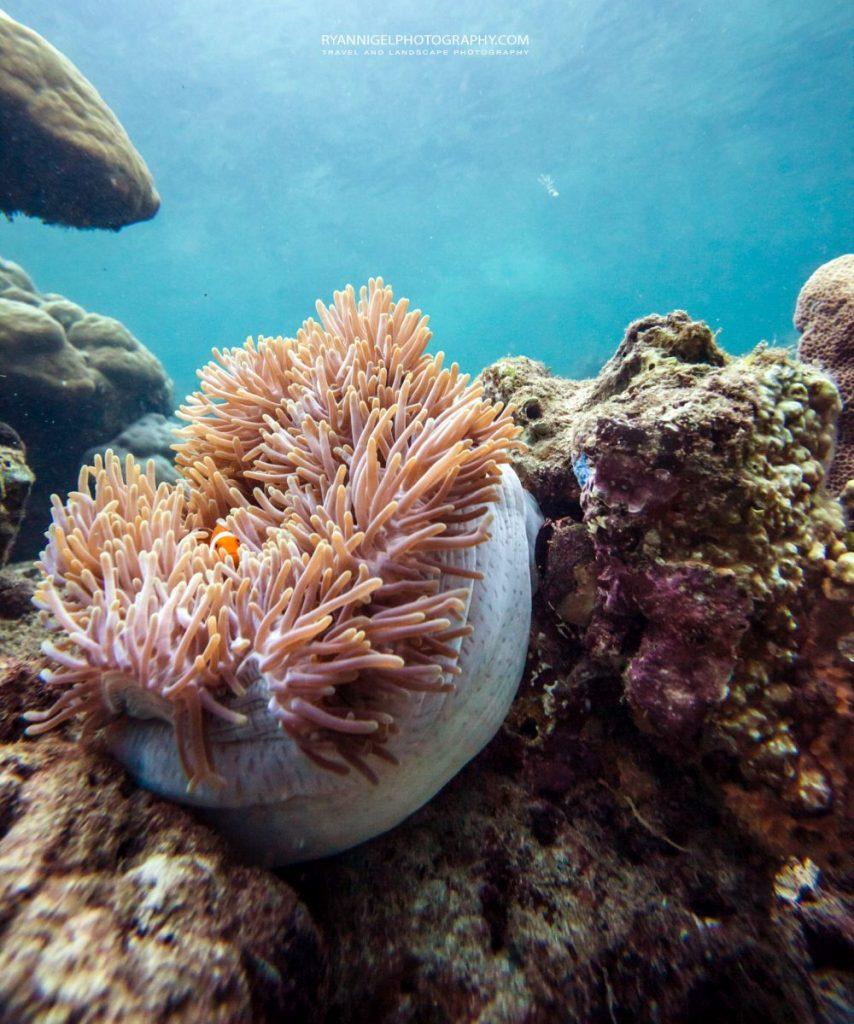 snorkeling mansuar island raja ampat 7