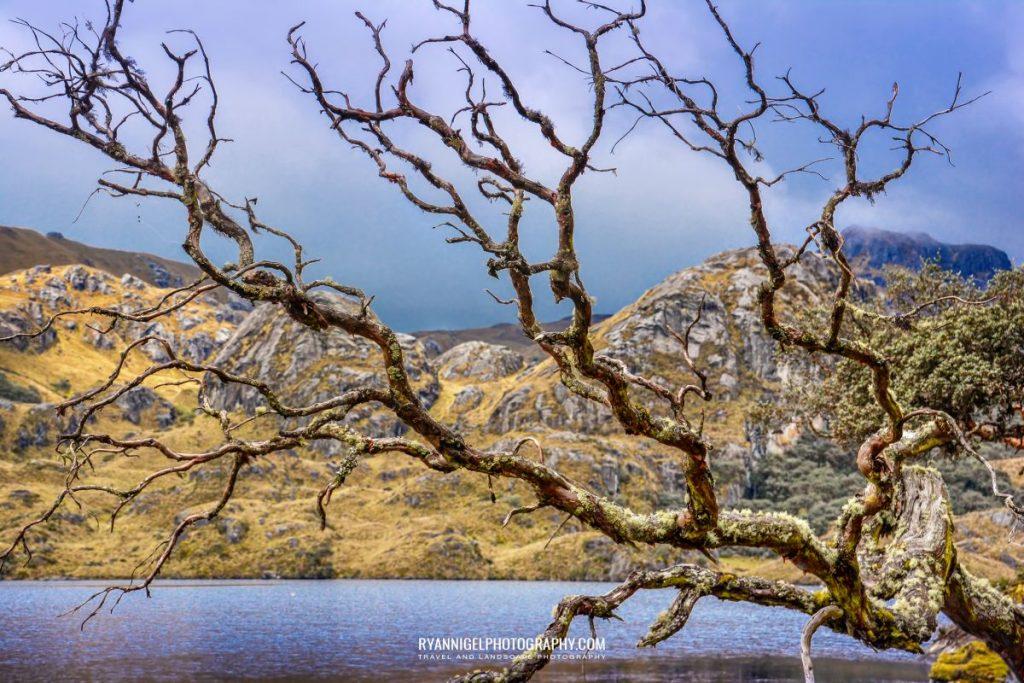cajas-national-park_17054027045_oedit