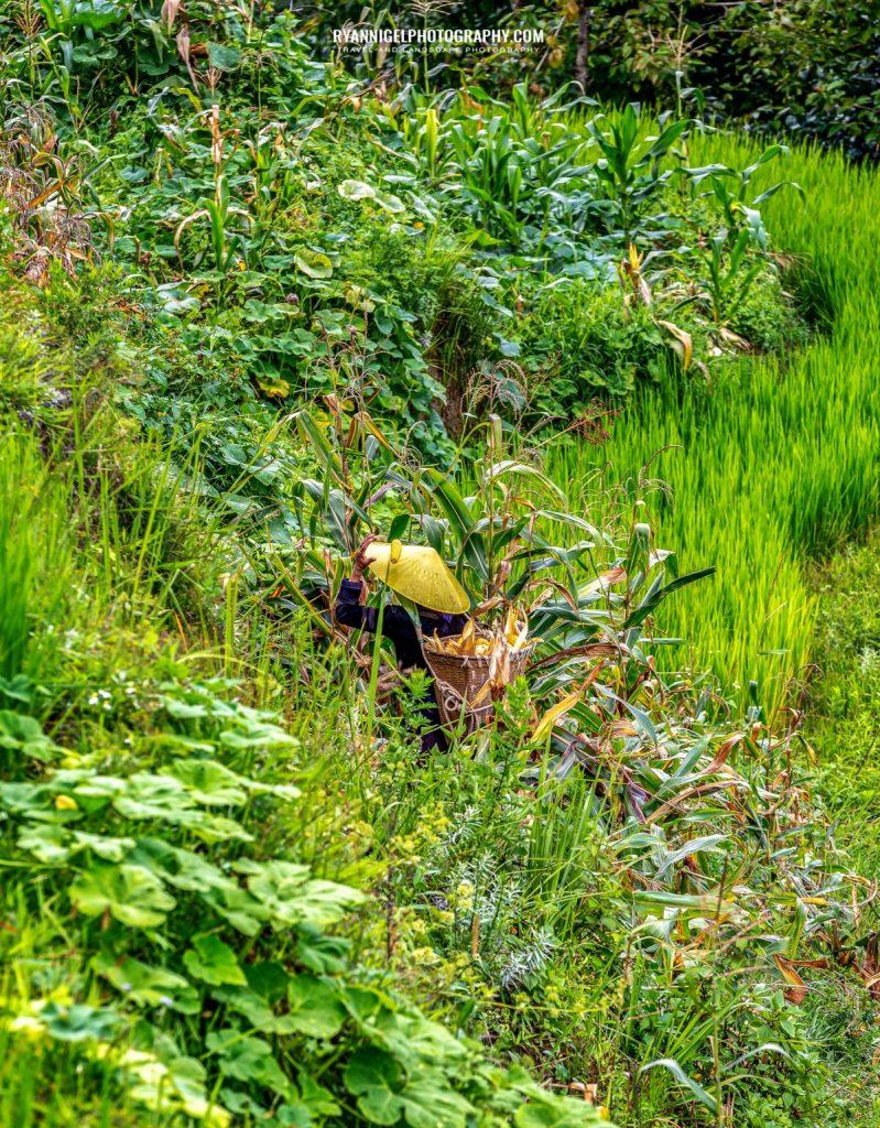 rice-fields-of-yuanyang_48660555058_oedit