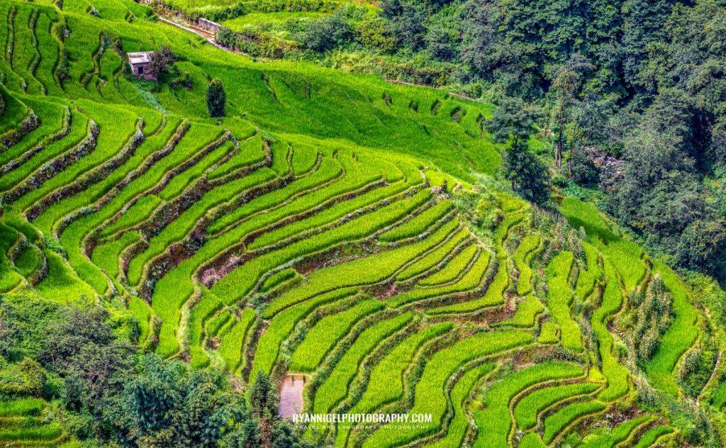 rice-fields-of-yuanyang_48660906551_oedit