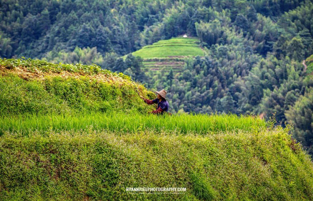 rice-terrace-of-longji_48660878951_oedit