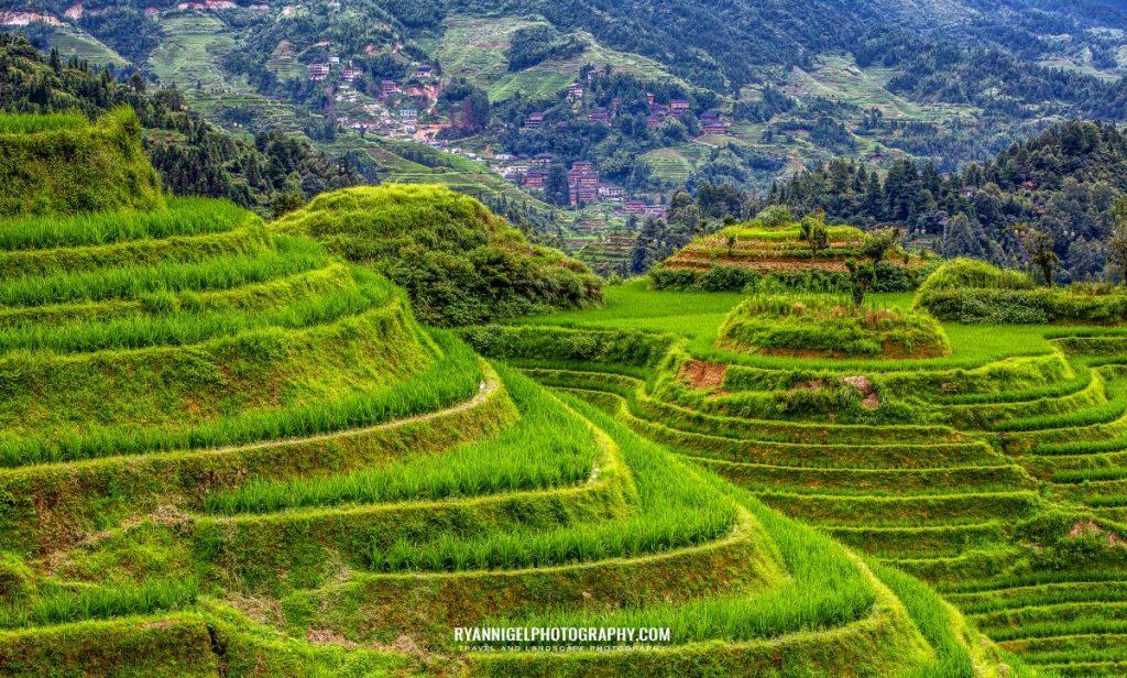 rice-terrace-of-longji_48660896096_oedit