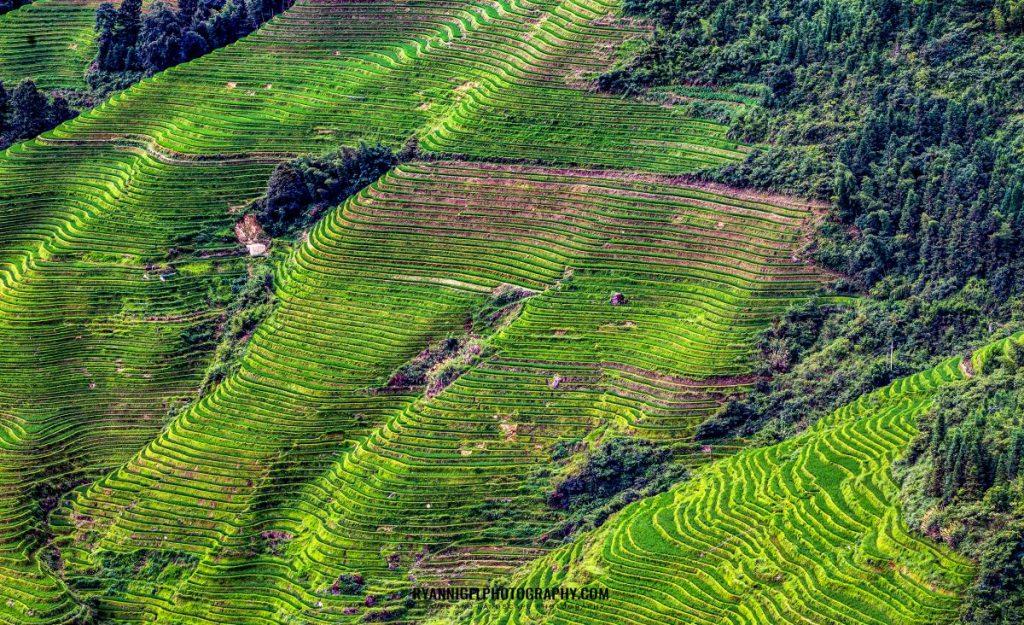 rice-terrace-of-longji_48661044127_oedit