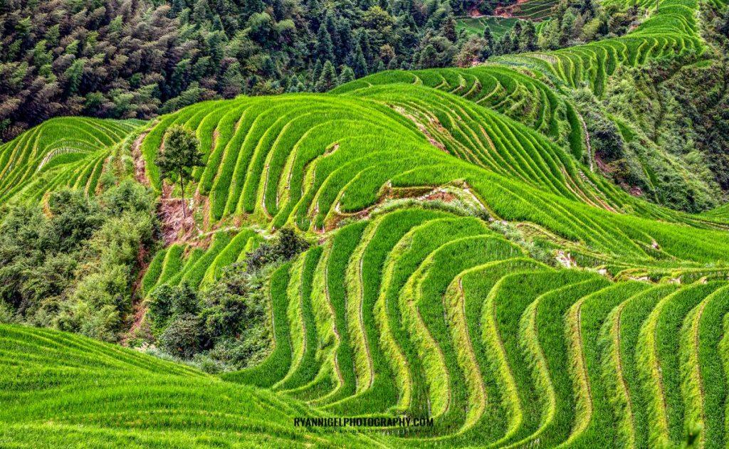 rice-terrace-of-longji_48661044387_oedit