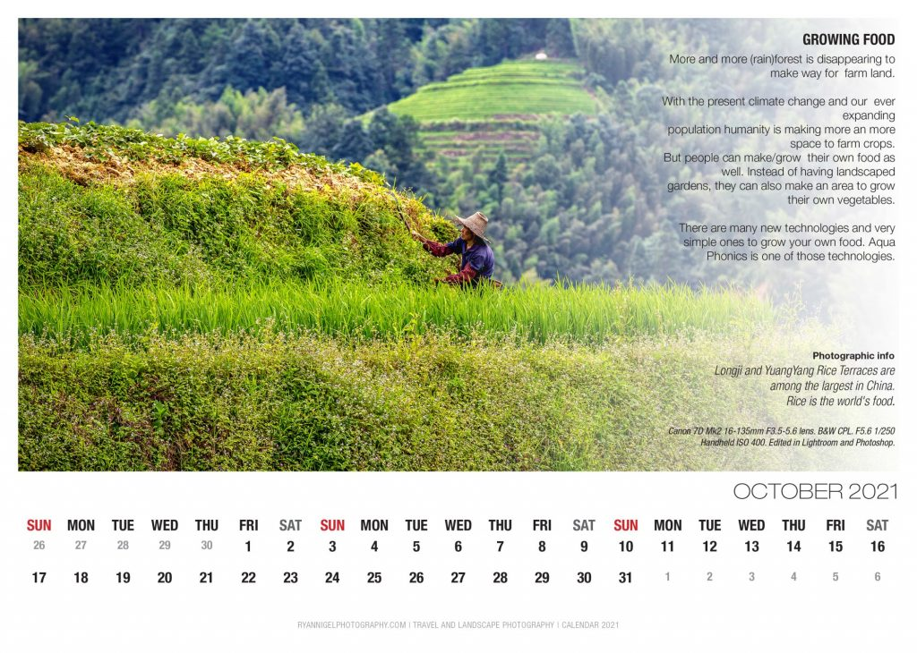 calendar 2021-11